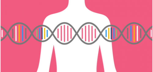 What-genetic-tests-are-done-during-pregnancy.png